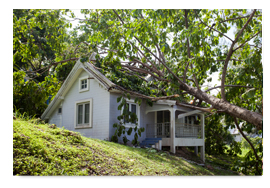 Storm Damage Clean-Up