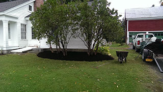 Trees Planted