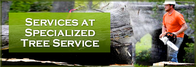 Specialized Tree Services