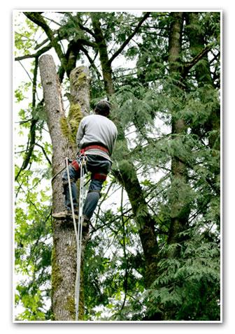 Marshall's Tree Service - Tree Trimming
