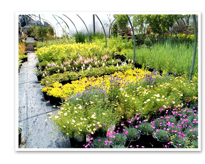 Oriental Garden Supply Rochester NY Nursery