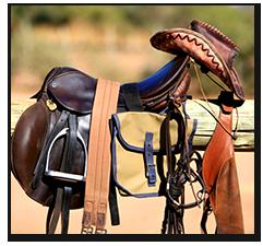 Horse Tack and Saddle